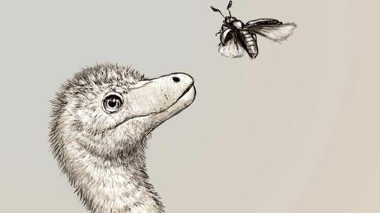Los primeros fósiles de embriones de tiranosaurio son revelados