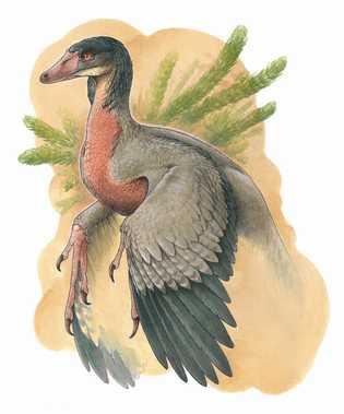 Overoraptor_Motta_Matias