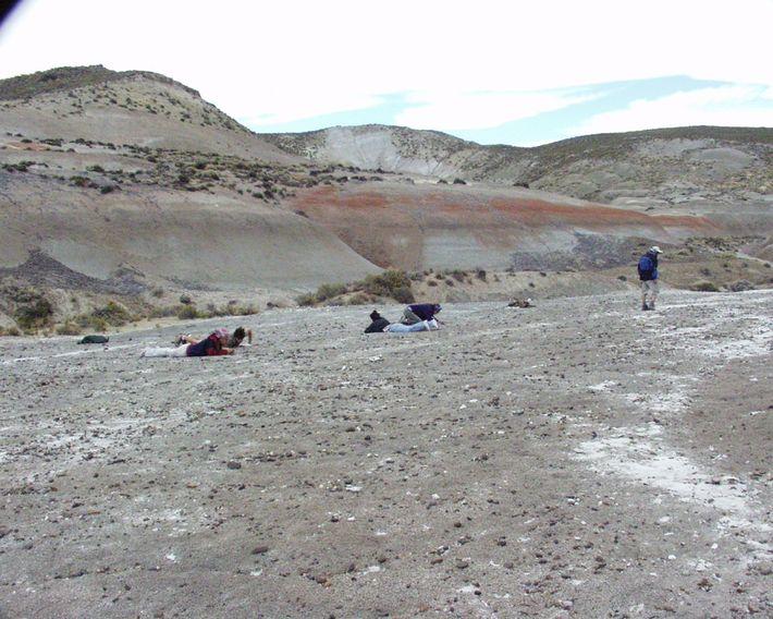 Trabajo de campo en la localidad chubutense de Punta Peligro, en una expedición encabezada por el ...