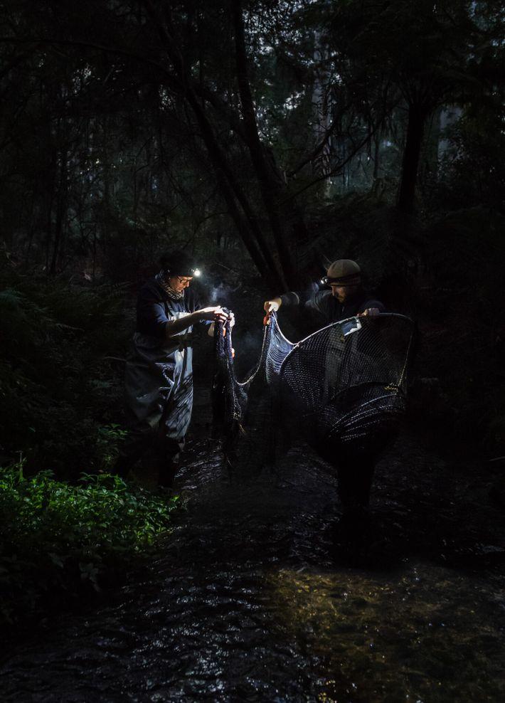 Cuando la luz solar comienza a iluminar el bosque, Josh Griffiths y Tamielle Brunt, estudiante de ...