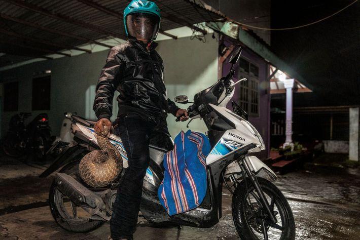 Un cazador de una aldea indonesia dice que entrega pangolines a la ciudad de Surabaya semanalmente. ...