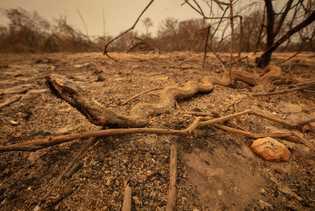 Una serpiente que murió durante el incendio yace al costado de la ruta en el norte ...
