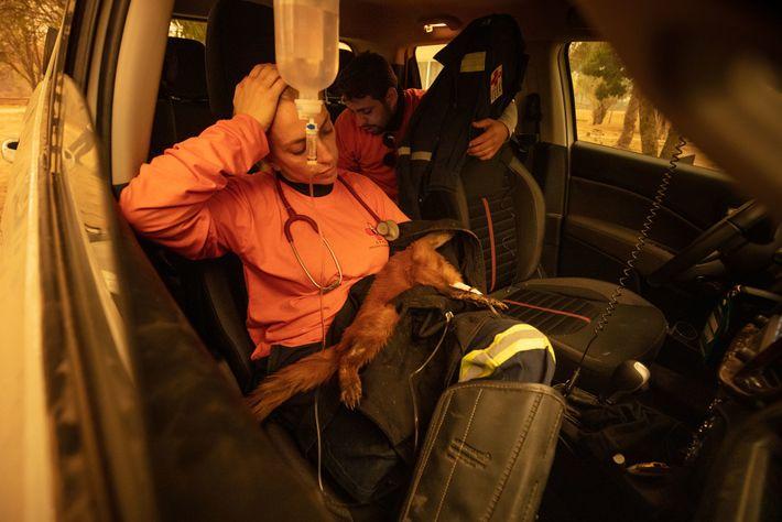 La veterinaria Carla Sássi asiste a un coatí que sufrió graves quemaduras en las patas.El animal ...