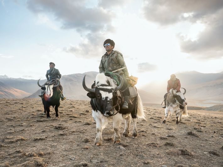 In the Wakhan corridor, Sidol (left), Jumagul (center), and Assan Khan (right) return on their yaks ...