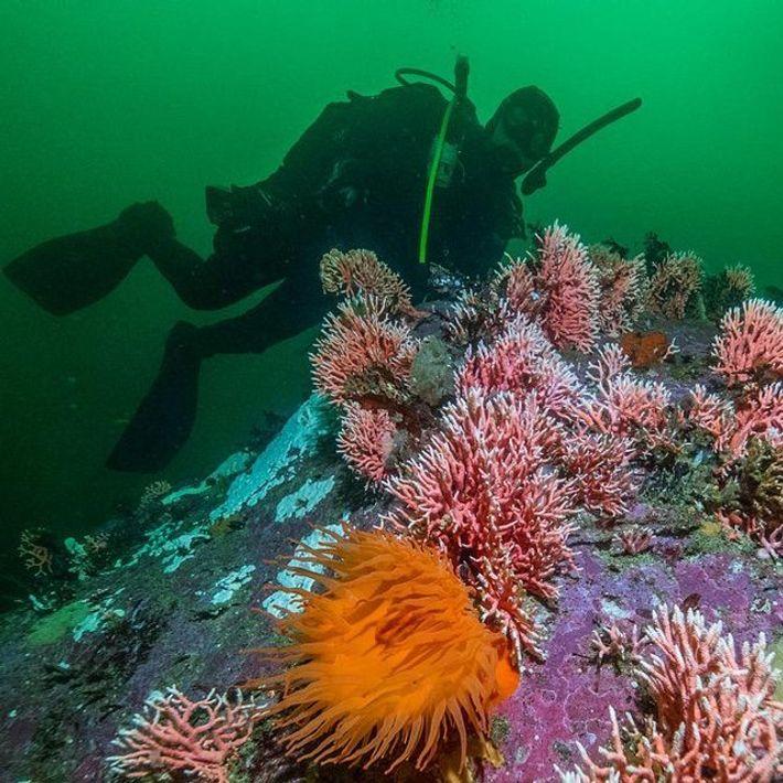 Imagen sobre la expedición de Pristine Seas a los Fiordos Patagónicos en la región austral de ...