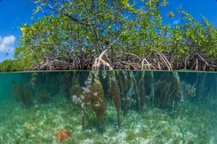 Playa Pelícano, South Water Caye, Belice