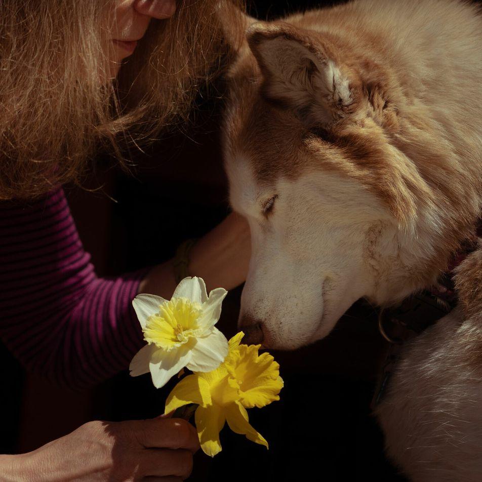 Mascotas y pandemia: los animales son un gran sostén para sus dueños, pero ¿cómo los afecta?