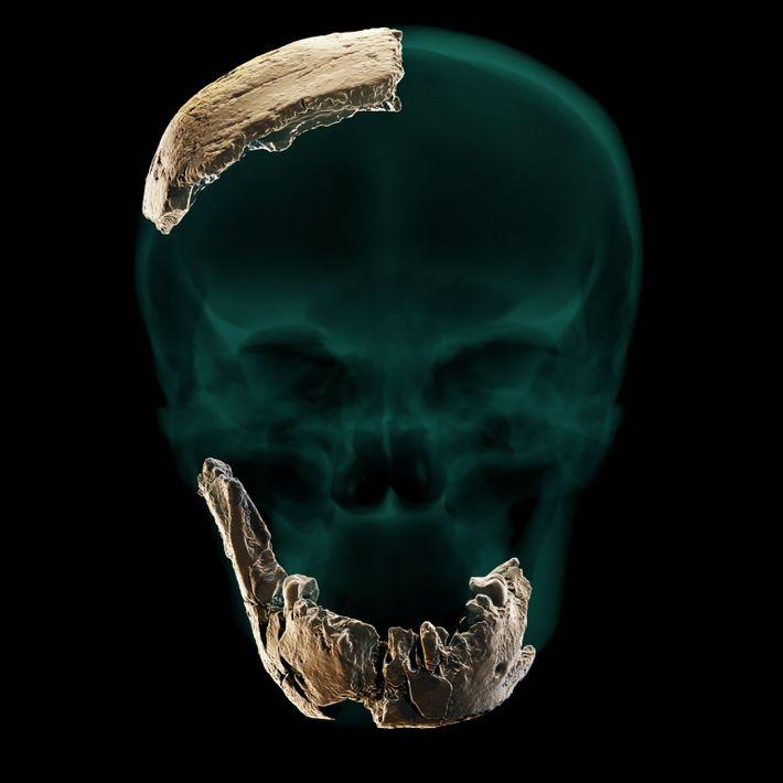 Los investigadores emplearon los escasos restos del cráneo de Nesher Ramla para crear una reconstrucción virtual ...