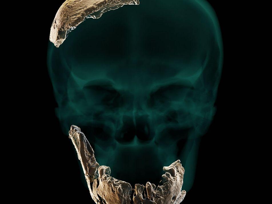 Hallazgo insólito: restos fósiles de un cráneo podrían apuntar a un antepasado humano desconocido hasta ahora