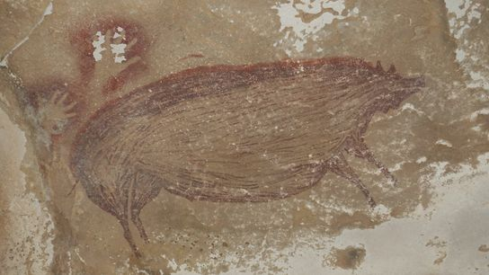 La criatura porcina sorprendentemente grande en la pintura rupestre podría reflejar un objetivo de caza principal ...