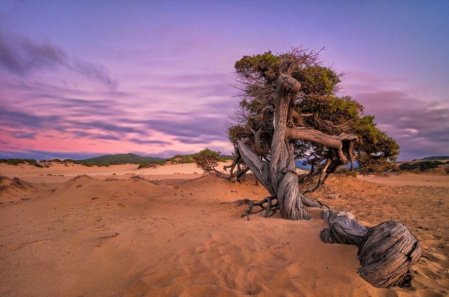 Un árbol caído yace sobre la Playa Piscinas.