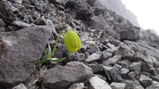 Esta planta desarrolla ciertos rasgos para esconderse del ser humano, su principal depredador