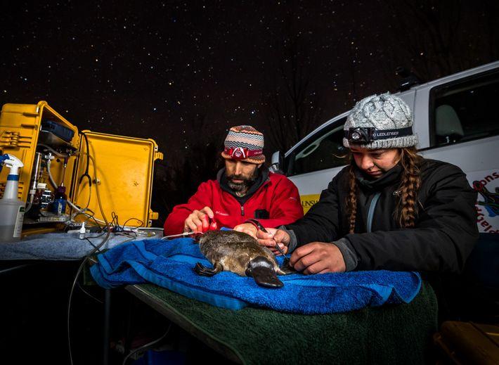 Gilad Bino y Tahneal Hawke colocan un transpondedor por radio temporal en la cola de un ...