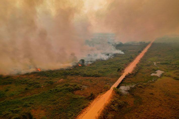 Los incendios se extienden a lo largo de la Transpantaneira, una ruta que atraviesa el Pantanal.