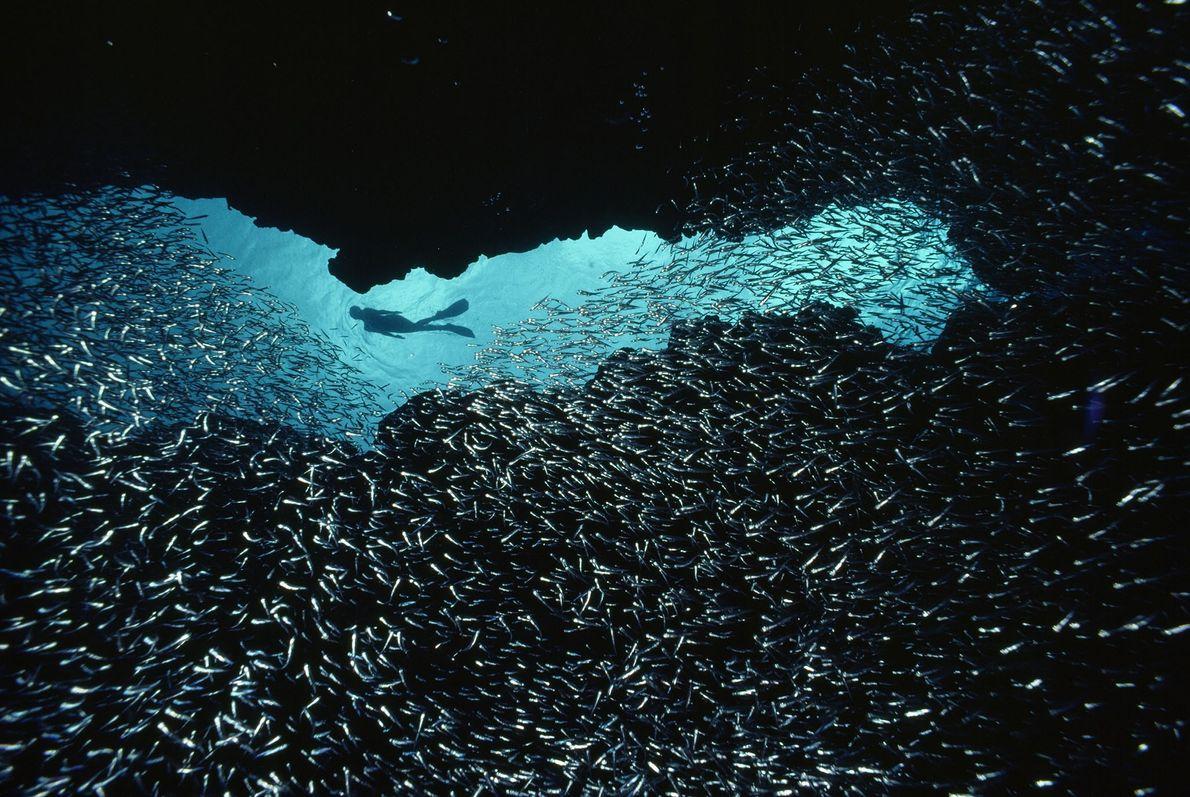 Entre los peces