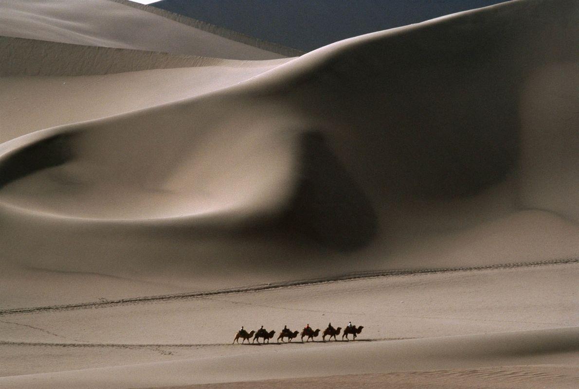 Fila de camellos