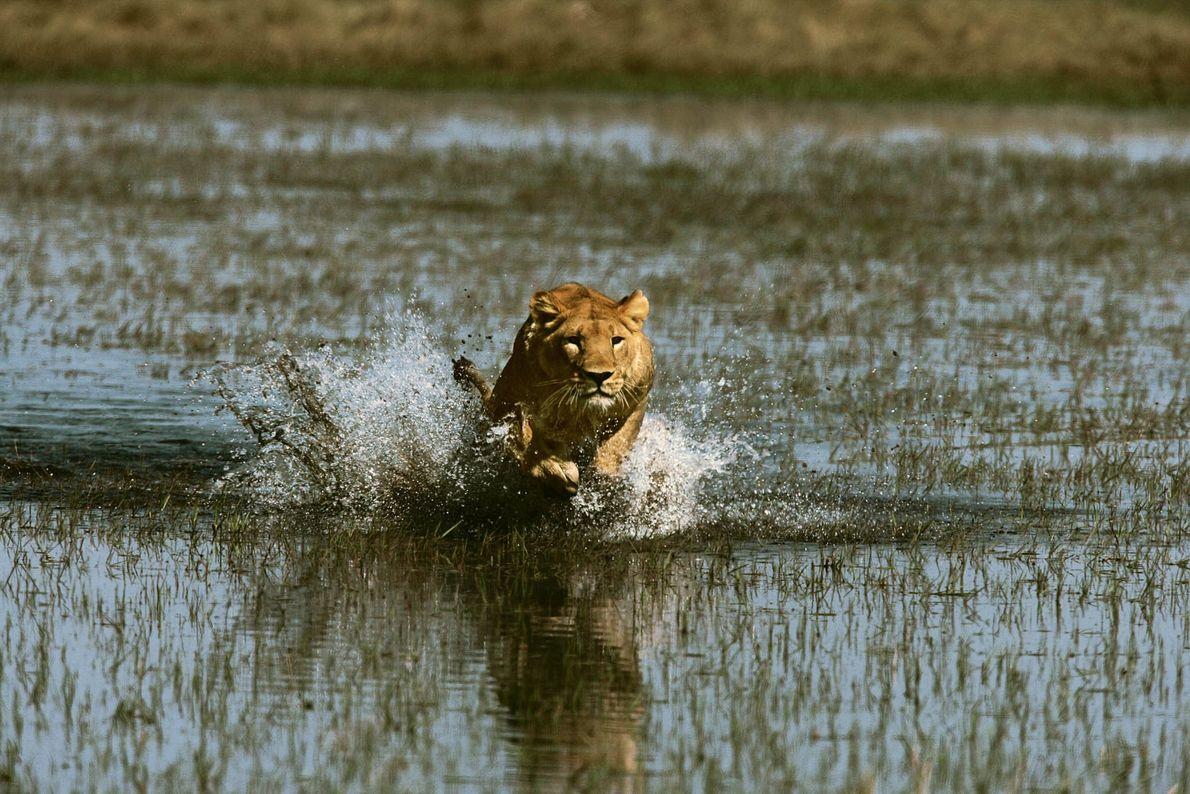 Corriendo hambrienta