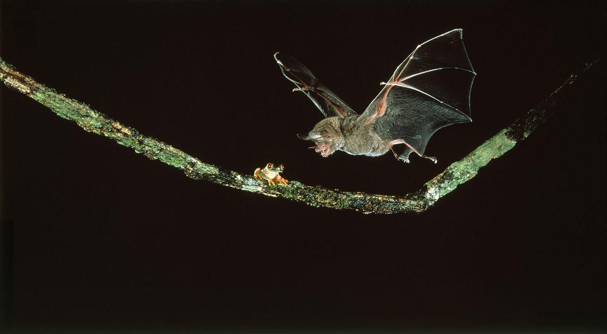 La señal del murciélago