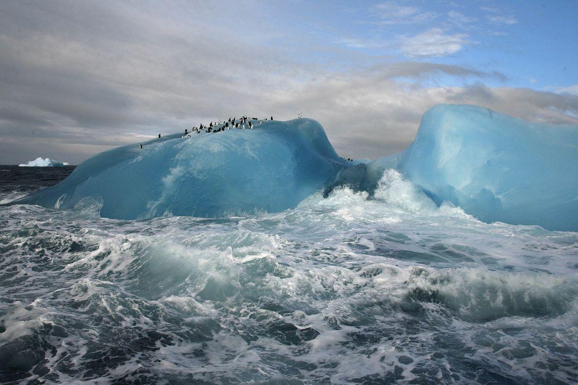 Paraíso de pingüinos