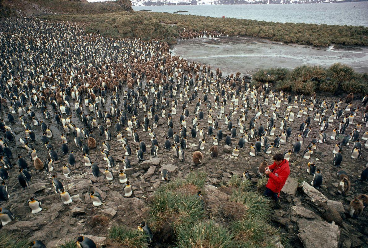 Colonias de pingüinos