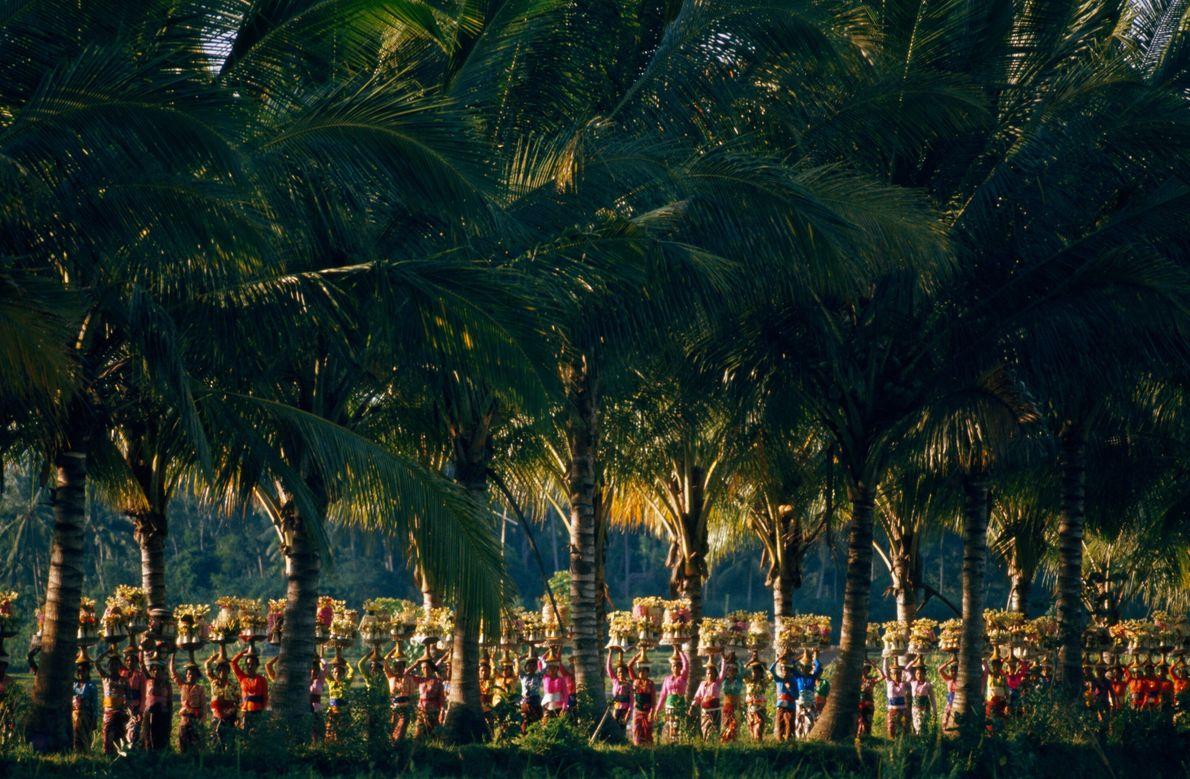 Desfile bajo las palmas