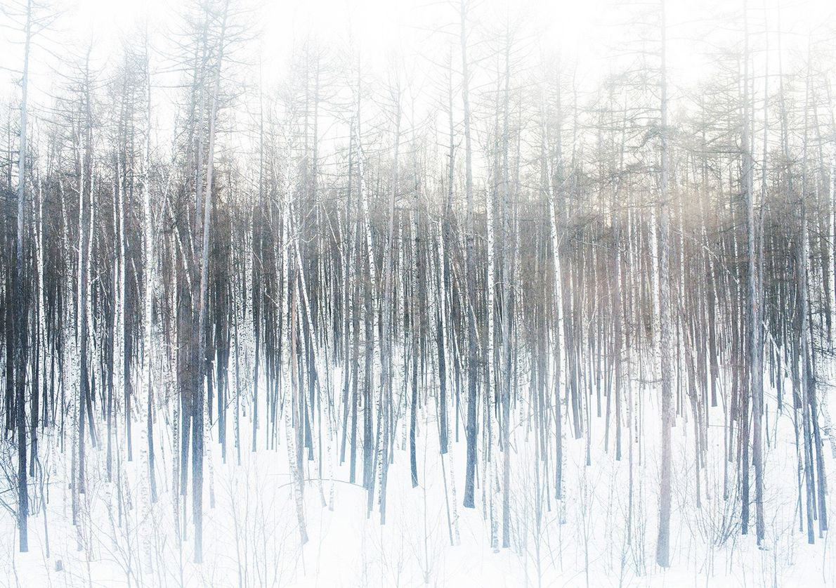 Bosque tranquilo