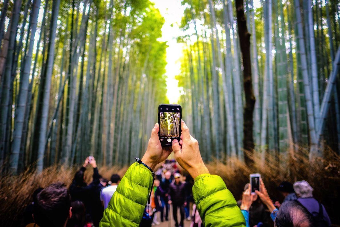 En medio del bambú
