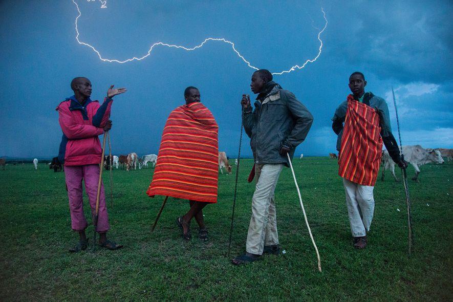 Unos masáis llevan su ganado a la reserva Masái Mara para reducir así el alimento de ...