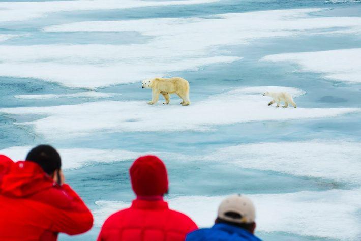 Los visitantes observan a dos osos polares caminando a través del hielo en Svalbard, Noruega. Es ...