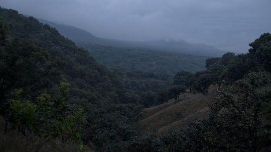 Se han hallado tarántulas en el Área Natural Protegida Bosque La Primavera, cerca del centro de ...