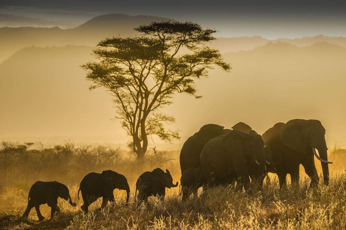 Parque Nacional Meru, Kenia