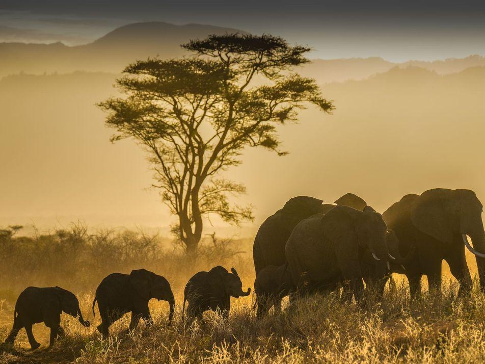 30 fotografías impresionantes de la vida silvestre en distintas partes del mundo
