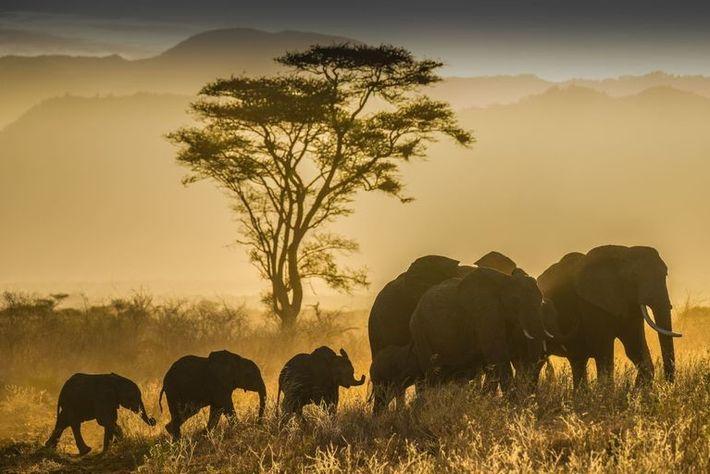 Parque nacional de Meru durante la estación seca de septiembre. Las condiciones secas y polvorientas del ...