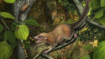 ¿Los antiguos primates convivieron junto al T. rex? Nuevas evidencias respaldan la teoría