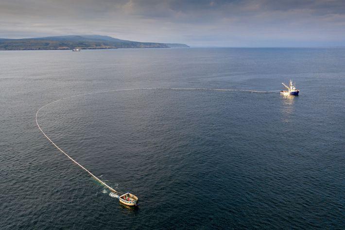 Una red de cerco rodea a los peces en la isla Iturup en el Lejano Oriente ...
