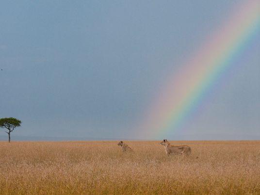24 imágenes brillantes de arcoíris en todo el mundo