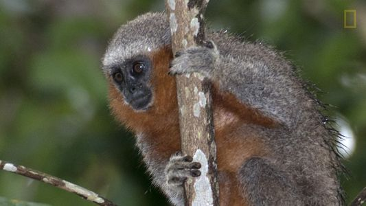 En el Amazonas, una nueva especie es descubierta día por medio
