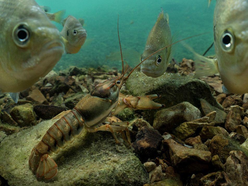 Sumérgete en el mundo de los animales de agua dulce