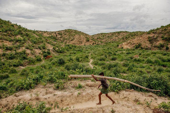 Un niño rohingya arrastra un tronco desde el bosque hasta el campamento. La tala de árboles ...