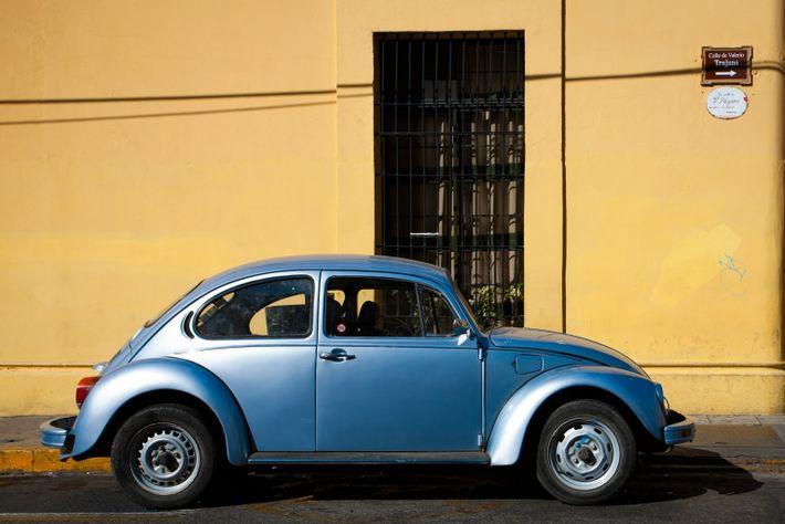Oaxaca Bug-blue