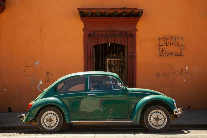 Oaxaca Bug-green
