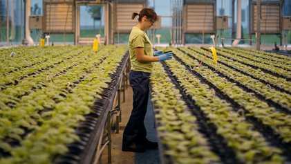 Las próximas vacunas podrían obtenerse a partir de plantas