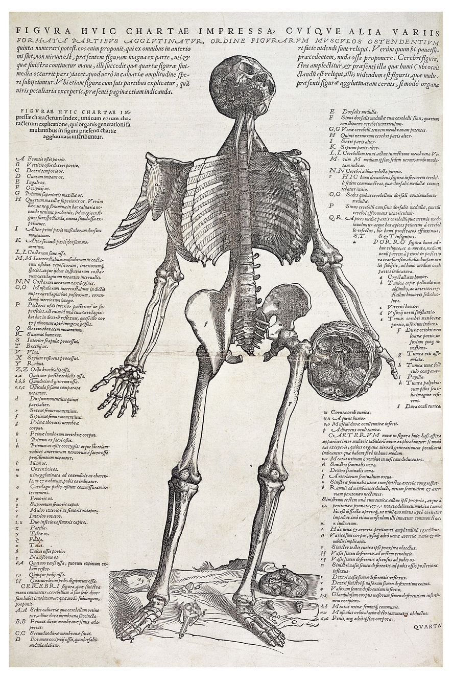 Esta impresión grabada sobre madera de un esqueleto que sostiene una calavera, con notas adjuntas, es ...
