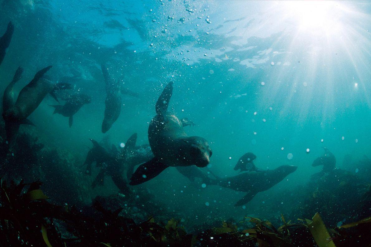 Seal Island, Sudáfrica