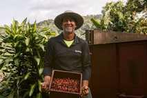 Luis Emilio con una pila de frescas y suculentas cerezas de café. Luis está muy orgulloso ...