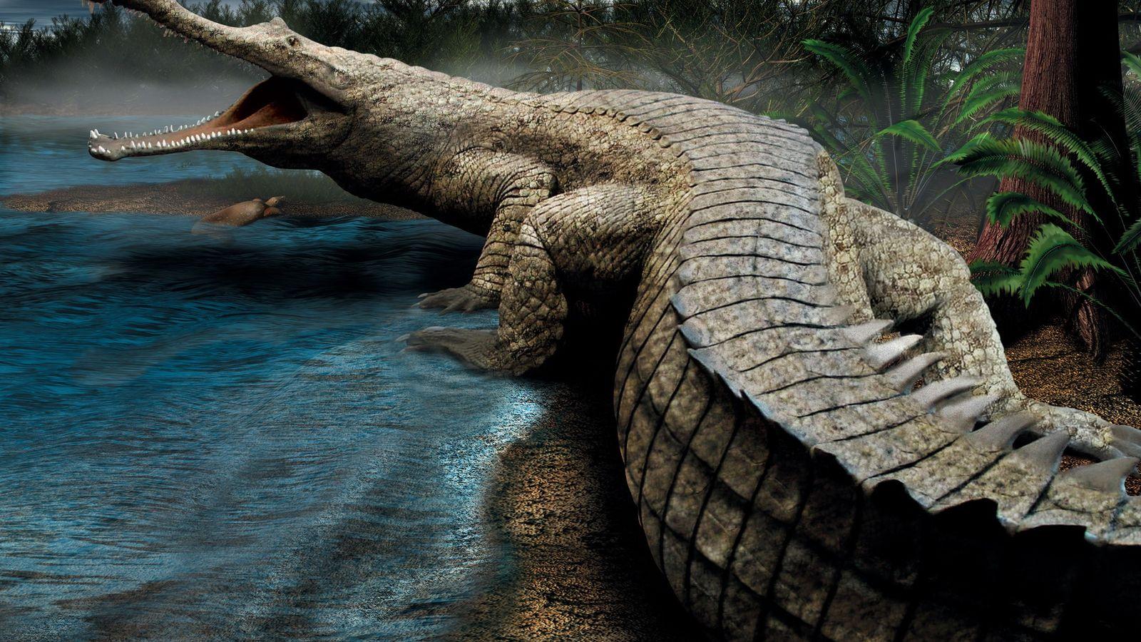 El Sarcosuchus imperator, apodado SuperCroc, era una criatura de la era del Cretáceo que pesaba 7938 ...