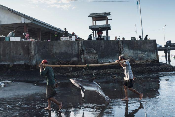 Los pescadores descargan a un tiburón en Tanjung Luar, en la isla indonesia de Lombok. El ...
