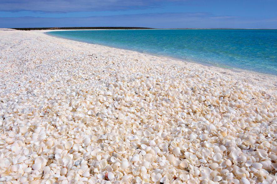 Shark Bay, Australia.