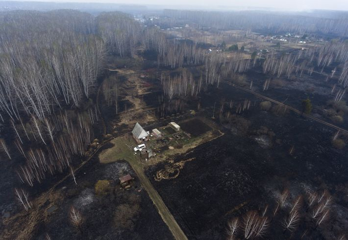 Una comunidad del sur de Siberia chamuscada por un incendio, uno de los cientos que arden ...