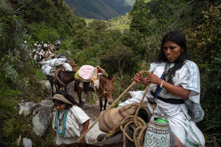 Seynekun Villafaña empuja a su mula hacia adelante a través de bosques enanos y arbustos que ...